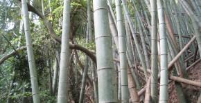 『竹を活用した仮設建築の設計-千葉県南房総市における里山プロジェクト-』